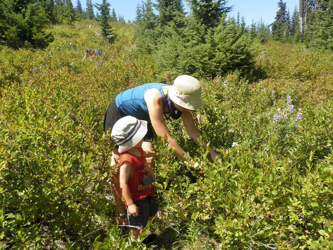 Stephanie wildcrafting during herbal campout with teacher, the late and fabulous Cascade Anderson Geller, and son. Mt. Adams